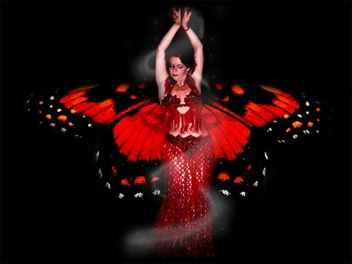 Faracha vlinder